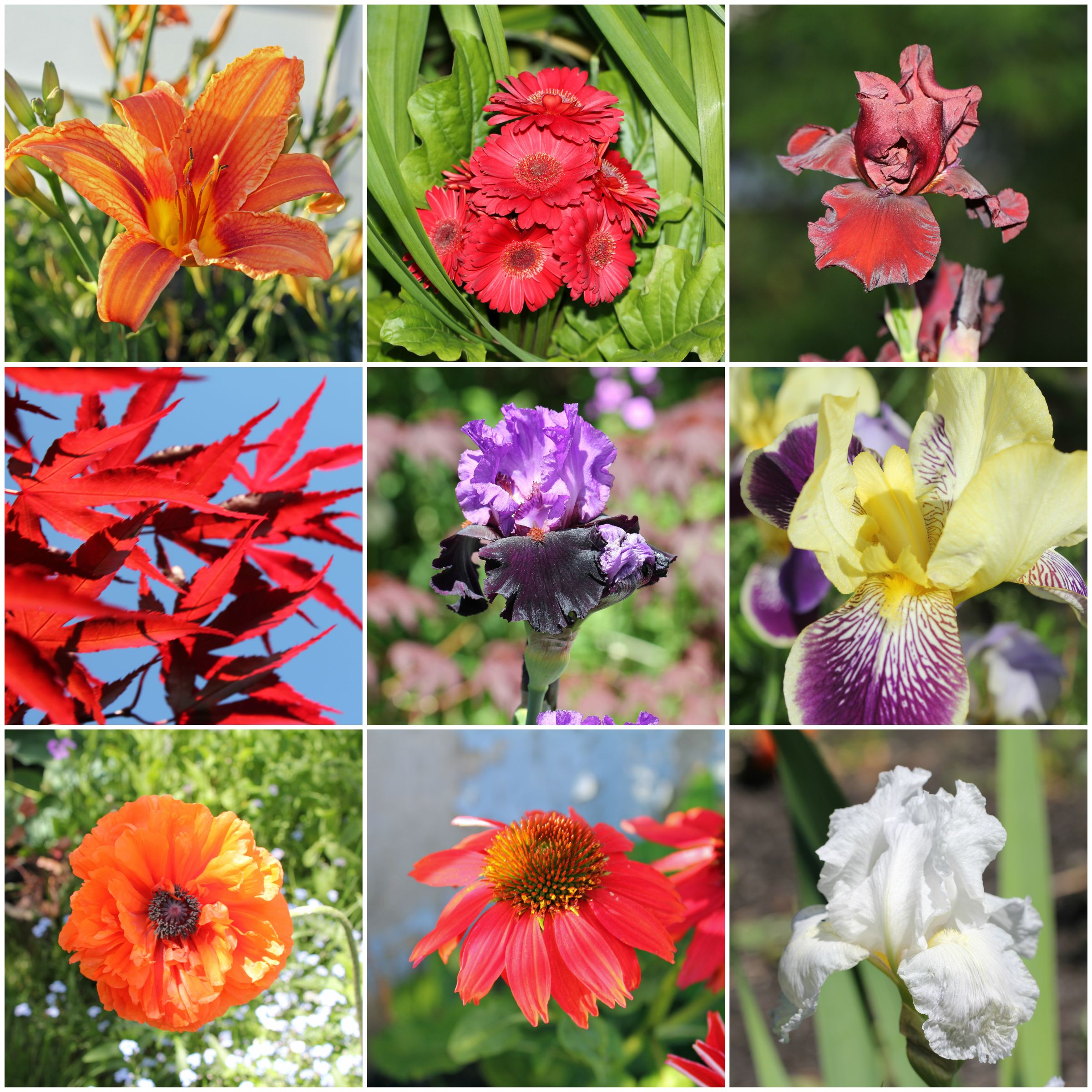 It's been a long winter, so I made a photo collage of the flowers from my garden in 2014. (The poppy is from 2013, though.) It almost seems impossible with all the snow still on the ground that anything will grow again this summer -- but it will!